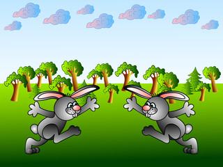 Funny  rabbits