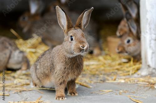 Junge Kaninchen - 21256237
