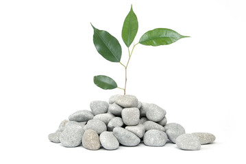 Stones and tree on a white background