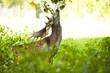Hirsch frißt Blätter