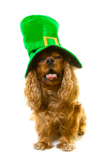 dog in green hat, isolated