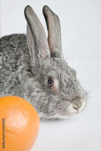 A Rabbit and a Tangerine