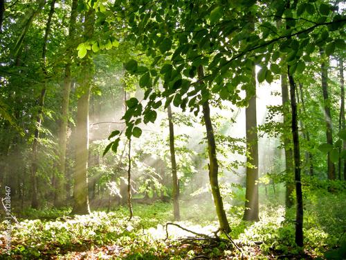 canvas print picture Sommerwald mit einfallendem Licht
