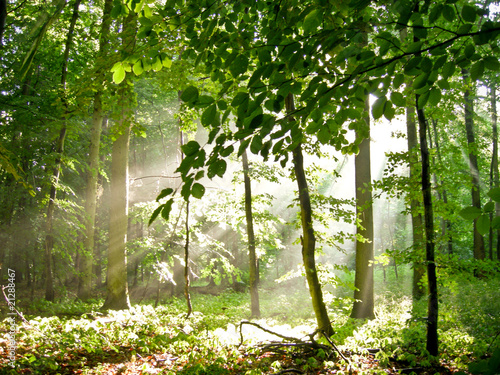 Sommerwald mit einfallendem Licht