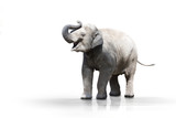 Junger Elefant wd607