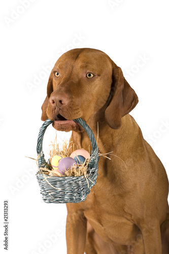 dog holding basket of eggs