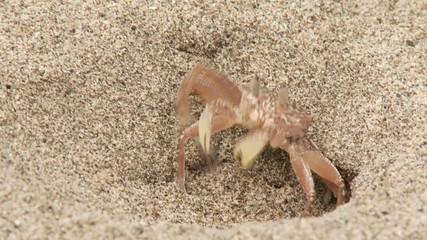 Krabbe weht sich