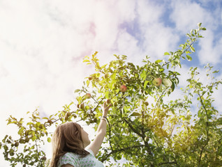 Girl reaching for apple on tree