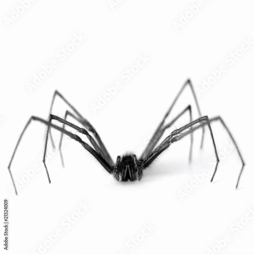 Close up of black and white spider