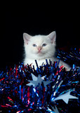 Kitten with Fourth of July streamers poster