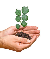 tree seedling in hands as a symbol of nature potection