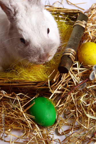 Easter bunny with eggs on background