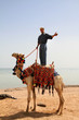Beduin man on his camel in Egypt