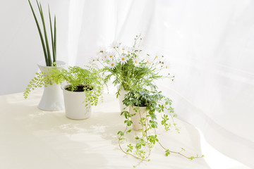 Flower and foliage plant on table
