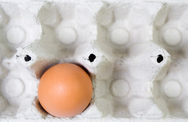 Single egg in paper tray