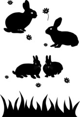 rabbits isolated
