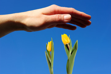 a protective hand with flowers