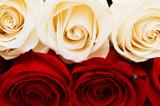 Fototapeta kwiat - czerwony - Kwiat
