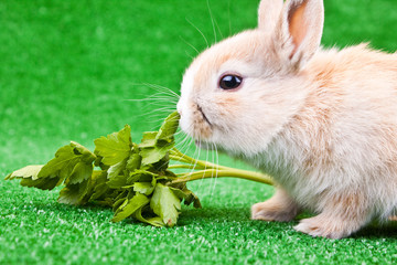 one little rabbit eating salad
