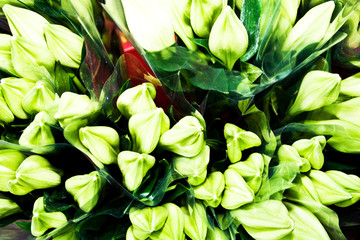 beautiful flowers at the flower market