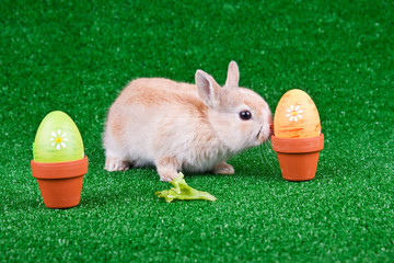 bunny playing between easter eggs