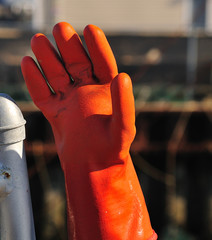 whimsical latex orange glove stuck on a fence post