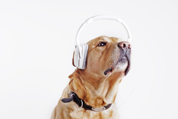 dog sitting in the headphone