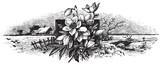 antique engraving (vector) - 21407254