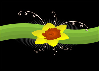 daffodil, made in the abstract vector illustration