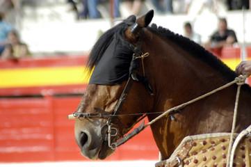 Caballo de picador en corrida de toros 69