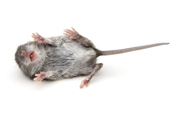Mouse on Back
