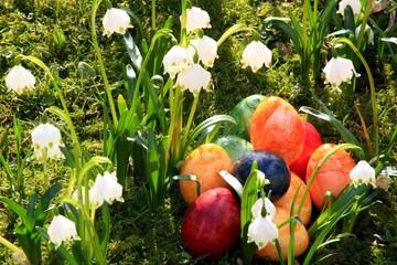 Ostereier, Märzbecher, Moos, Frühlingswiese