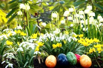 Ostereier, Märzbecher, Winterlinge, Frühlingswiese
