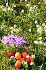 Ostereier, Krokusse, Märzbecher, Frühlingswiese, Moos