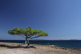 solitary tree on a cliff, Lesbos, Greece