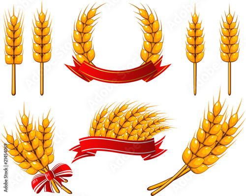 Collection of design elements. Wheat - 21454069
