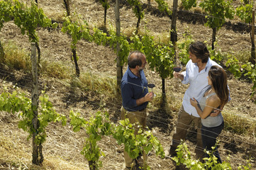 degustazione tra le viti
