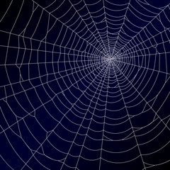 Spider's web. Vector.