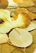 tapis de feuilles sèches