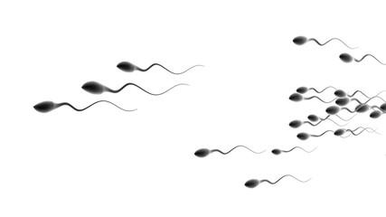 Human sperm compeition