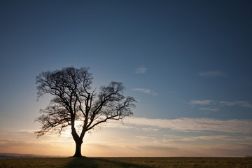 Silhouetted tree on a hilltop at sunset