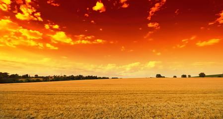blé et ciel de feu