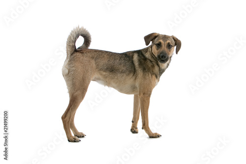 cute mixed breed dog looking at camera
