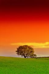 arbre seul et ciel de feu