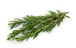 Fresh rosemary isolated on white background
