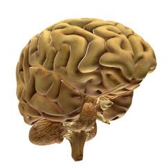 Brain Bio