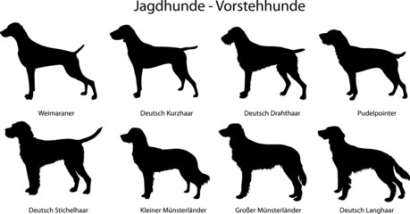 Jagdhunde - Vorstehhunde
