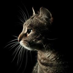 Retrato de gato común