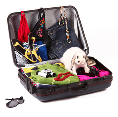 valigia per levacanze con coniglietto