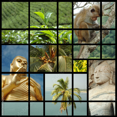 Sri lanka collage with photos of tea plants,buddha and monkeys